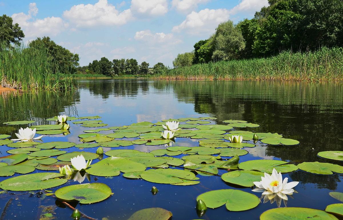 В Витебской области стартовала акция «Чистый водоём» - Новости Витебска и  Витебской области