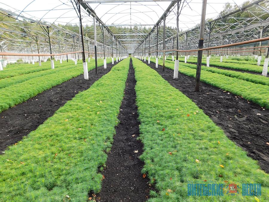 Выращивание посадочного материала 80