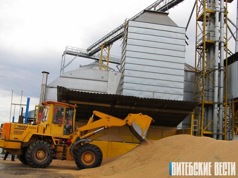 Да 500 тон збажыны ў дзень разгружаюць на Міёрскім камбікормавым заводзе