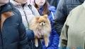 Площадка для выгула животных стала ареной противостояния в одном из микрорайонов Витебска