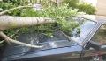 Аварийное отключение электролиний и падение деревьев. Какой урон нанес грозовой шторм на Витебщине?
