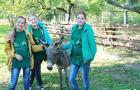 «Лесной народ», или Как волонтеры Полоцкого лесного колледжа стали одними из лучших в стране