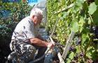 Личный блог в интернете и 150 сортов винограда на огороде. Садовод-новатор живет на Оршанщине