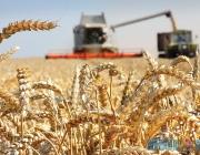 В Витебской области намолотили более 1 млн тонн зерна