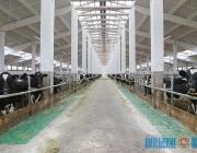 """Более 80% вложений Витебский концерн """"Мясо-молочные продукты"""" направит на развитие сельскохозяйственных филиалов"""