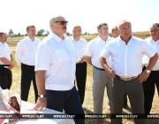 Александр Лукашенко посетил хозяйства Могилевской и Витебской областей