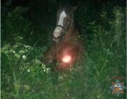 Провалившуюся в яму лошадь спасли сотрудники МЧС в Ушачском районе