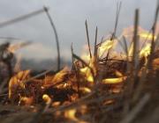 С начала весны на Витебщине зарегистрировано 22 случая пала сухой травы