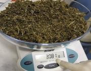 Витебчанин хранил в тайнике более 300 граммов марихуаны