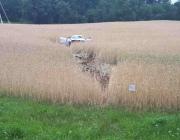 Под Витебском по вине уснувшего водителя легковушка вылетела в поле