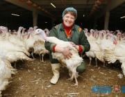 Спрос на индейку растет. Городокская птицефабрика планирует в новом году произвести 1,5 тыс. тонн индюшатины
