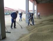 Прокурорские работники области помогли аграриям в уборке урожая