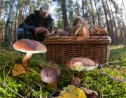 В Витебской области ожидается хороший урожай грибов