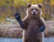 Медведь разорил ульи и напугал отдыхающих в Докшицком районе