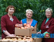 Овощи ОАО «Рудаково» поставляются на прилавки Москвы, Санкт-Петербурга и Калининграда