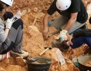 К раскопкам археологического комплекса эпохи викингов на Шумилинщине планируют привлечь местное население