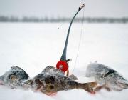 Областной турнир по зимней рыбной ловле пройдет в Ушачском районе