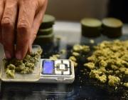 Витебчанин и его подельник хранили на даче более 3 кг марихуаны