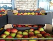 Оперативная таможня задержала два грузовика с нелегальными фруктами на территории Городокского района