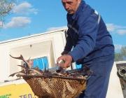 Около 1,5 тыс особей стерляди запустили для зарыбления в Днепр в Дубровенском районе