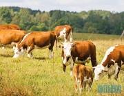 Хозяйства области готовятся к пастбищному периоду содержания животных