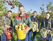 Как получить урожай яблок в неурожайный сезон, и какие сорта лучше? Испытано  на Лужеснянской сортоиспытательной станции
