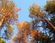 Лесхозы Витебской области оказывают помощь Гомельщине в борьбе с короедом