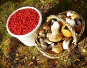 Как нынешнее лето скажется на урожае ягод и грибов в лесах Витебщины