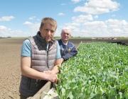 В ОАО «Рудаково» завершили сев капусты, моркови и свеклы