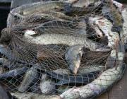 Отец и сын из Верхнедвинского района за браконьерство понесут заслуженное наказание