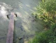 В Бешенковичском районе двухлетний мальчик утонул в водоеме возле дома