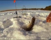 За незаконную ловлю рыбы на водоемах Витебщины привлечены 53 нарушителя