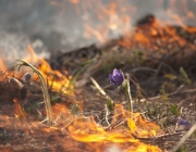 Чем чреват весенний пал травы: о вреде для почвы и штрафах