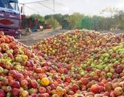 Свыше 19 т яблок задержали витебские таможенники