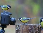 Соревнование по фотобёрдингу организует Березинский биосферный заповедник