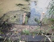 5-летний мальчик утонул в пруду возле дома в Глубокском районе. Работают следователи