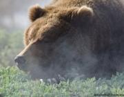 Браконьер убил бурого медведя на территории Березинского биосферного заповедника