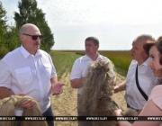 Лукашенко о белорусском льноводстве: «Рентабельность не хуже, чем у нефти»