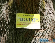 Туристы приезжают в Городокский район загадать желание у 300-летнего дуба-великана