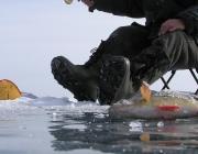 Еще один рыбак утонул в Витебской области. На этот раз трагедия в Городокском районе