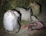 Жителей Россонского района будут судить за убитого лося