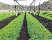 Строительство комплекса по выращиванию посадочного материала с закрытой корневой системой начали в Глубокском районе