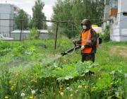 Волонтеры включились в борьбу с борщевиком в Ушачском районе