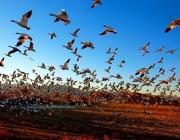 Понаблюдать за весенней миграцией птиц предлагает туристам Березинский заповедник