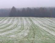 Как нынешняя зима может сказаться на озимых зерновых? Мнение эксперта