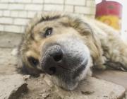 В Витебске будут судить женщину, сбросившую собаку с 8-го этажа