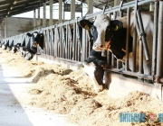Качество молока сельхозпредприятий Витебской области значительно выросло