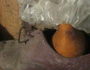 Полкилограмма ртути обнаружено в подвале трехэтажки в Полоцком районе