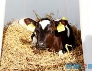 В пяти районах Витебской области планируется развивать мясное скотоводство