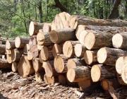 Частное предприятие умышленно занижало цену на заготавливаемую древесину в Миорском районе